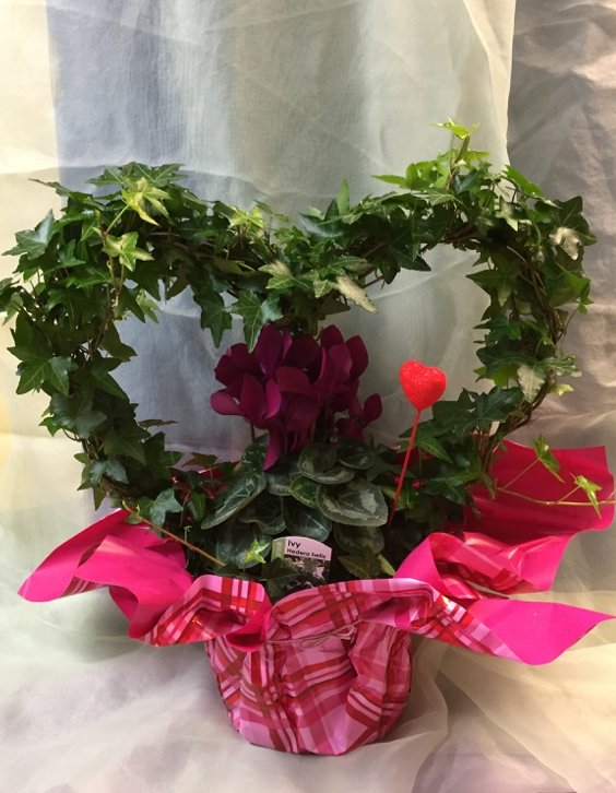 For 2015 Ivy Heart with Cyclamen plant $29.98.jpg